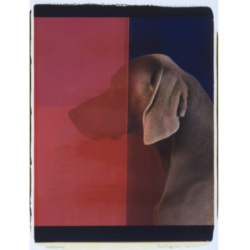 William Wegman, Red Detachment, 2006, Polaroid print on paper, 24 ¼ × 20 ¾ inches. 2007 Collectors' Circle purchase. 2007.33.02.96. © William Wegman.